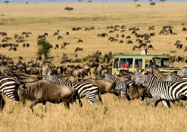Nên đi đâu chơi khi du lịch Châu Phi? Địa điểm tham quan, vui chơi hấp dẫn, độc đáo nhất ở Châu Phi