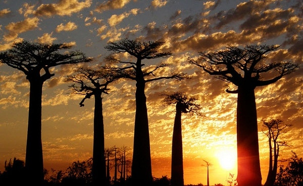 Kinh nghiệm du lịch châu Phi giá rẻ. Hướng dẫn, cẩm nang, phượt châu Phi tự túc, giá rẻ cảnh đẹp, thuận tiện, tiết kiệm