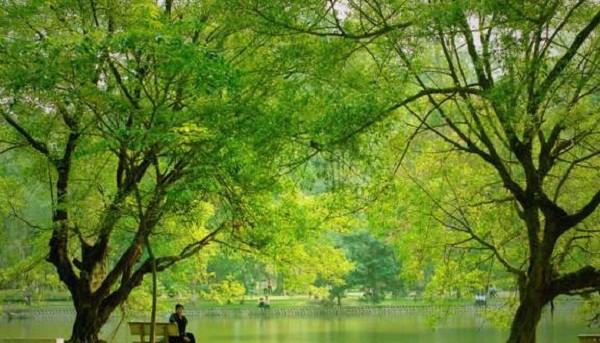 Top công viên đẹp nhất ở Hà Nội kèm địa chỉ và giá vé. Nên đi công viên nào ở Hà Nội đẹp, không khí sạch, đặc biệt nên tới.