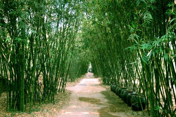 Kinh nghiệm du lịch làng tre Phú An điểm đến gần HCM. Hướng dẫn, cẩm nang, phượt làng tre Phú An, Bình Dương đường đi, giá vé...