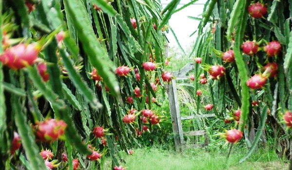 Đặc sản nổi tiếng ở Bình Thuận: Bình Thuận có đặc sản gì ngon?
