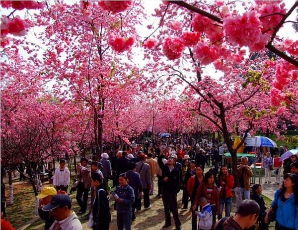 Du lịch mùa xuân ở đâu Trung Quốc đẹp nhất? Địa điểm tham quan, vui chơi hấp dẫn ở Trung Quốc nên tới trong mùa xuân