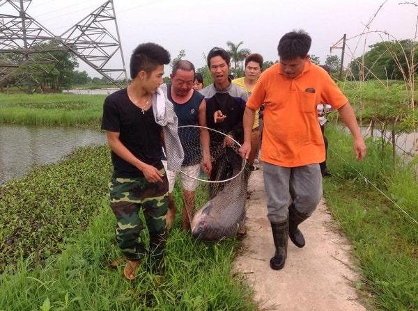 Danh sách địa điểm câu cá ở Hà Nội: địa chỉ, điện thoại, giá
