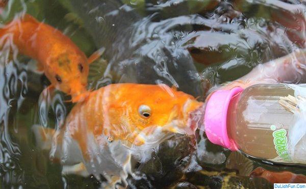 Hướng dẫn đi chơi ở khu trượt thác Hòa Phú Thành, Đà Nẵng: Trò chơi cá bú bình ở khu trượt thác Hòa Phú Thành