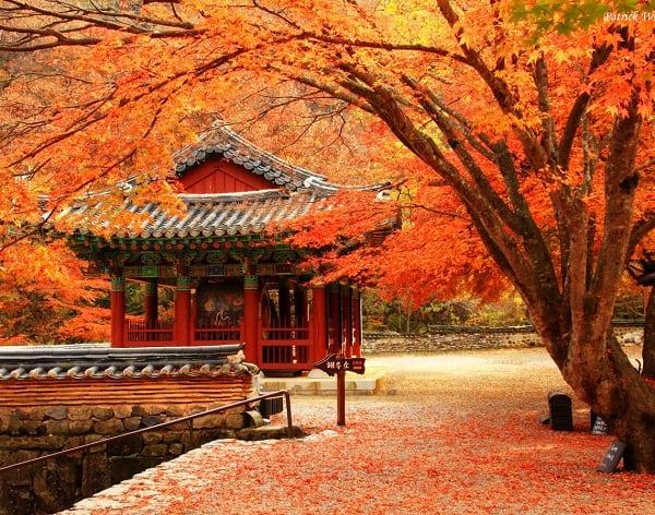 Địa điểm tham quan, du lịch Nhật Bản trong mùa thu: Mùa thu nên đi chơi ở đâu Nhật Bản?