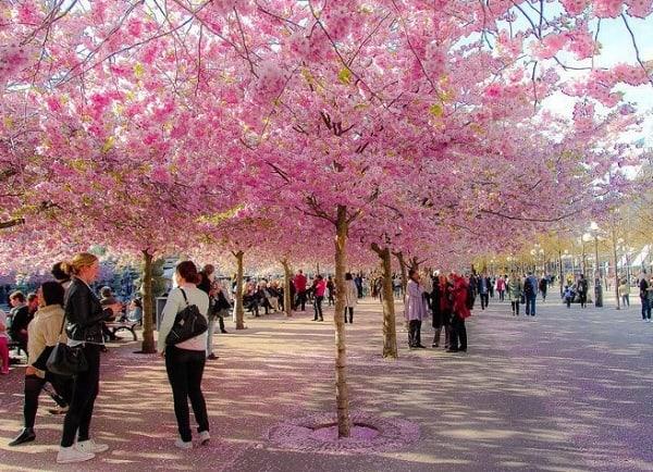 Du lịch Nhật Bản mùa đông nên đi đâu chơi, tham quan? Kinh nghiệm đi du lịch Nhật Bản mùa xuân tự túc, giá rẻ - Địa điểm du lịch nổi tiếng ở Nhật Bản vào mùa xuân