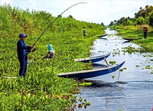 Hướng dẫn đi du lịch vườn quốc gia U Minh Hạ tự túc, thuận lợi: Rừng U Minh Hạ có gì chơi vui, thú vị?