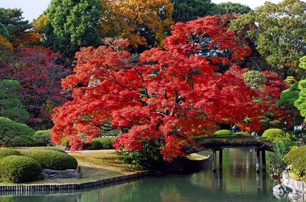 Kinh nghiệm đi du lịch Nhật Bản mùa thu giá rẻ: Danh lam thắng cảnh nổi tiếng ở Nhật Bản vào mùa thu