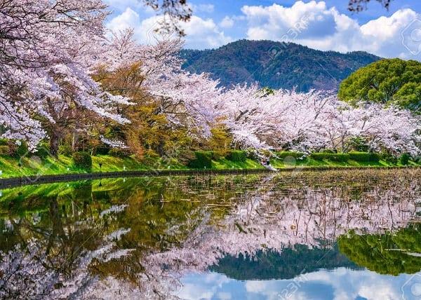 Kinh nghiệm đi tham quan, vui chơi ở Nhật Bản trong mùa xuân: Du lịch Nhật Bản mùa xuân nên đi đâu tham quan?