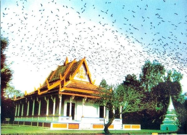 Du lịch Chùa Dơi, Sóc Trăng một ngày cực thú vị. Khám phá chùa Dơi, Sóc Trăng, nên chơi gì ở chùa Dơi, Sóc Trăng?