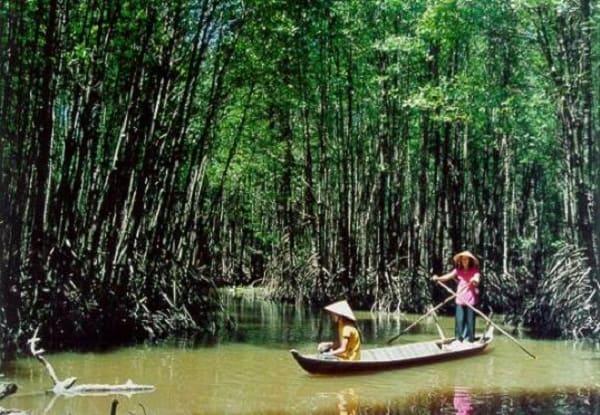 Kinh nghiệm đi rừng đước Năm Căn trải nghiệm đầy mới lạ