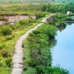 Hướng dẫn du lịch vườn quốc gia Xuân Thủy từ A tới Z. Hướng dẫn, cẩm nang, phượt vườn quốc gia Xuân Thủy đường đi, giá vé...
