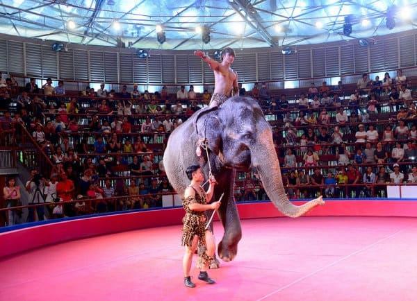 Hoạt động tham quan, vui chơi giải trí ở công viên văn hóa Đầm Sen, Sài Gòn: Công viên văn hóa Đầm Sen có gì thú vị?