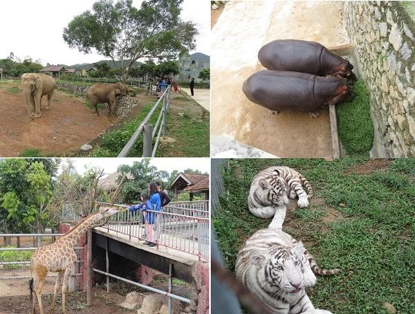 Khu du lịch Mường Thanh Safari Land có gì chơi, tham quan? Kinh nghiệm đi tham quan, du lịch Mường Thanh Diễn Châu