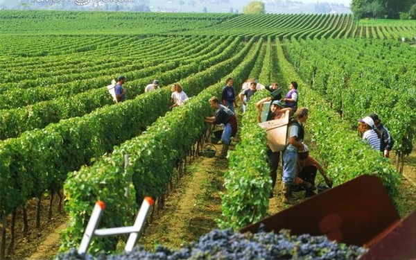 Kinh nghiệm du lịch Bordeaux tự túc chi tiêu tiết kiệm. Hướng dẫn, cẩm nang du lịch Bordeaux, Pháp cụ thể ăn uống, điểm tham quan.