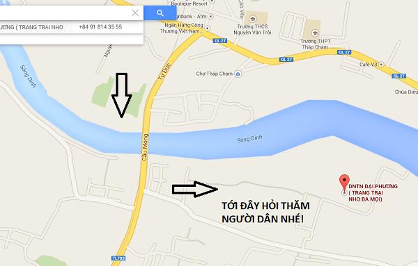 Du lịch vườn nho Ba Mọi đầu hè, địa điểm hot ở Ninh Thuận. Hướng dẫn bản đồ đường đi tới vườn nho Ba Mọi Ninh Thuận