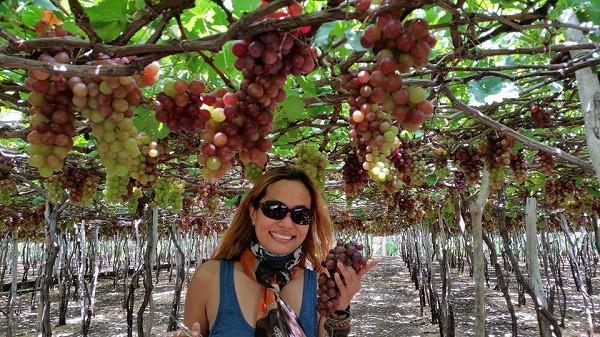 Du lịch vườn nho Ba Mọi đầu hè, địa điểm hot ở Ninh Thuận. Hướng dẫn du lịch vườn nho Ba Mọi thời điểm, đường đi, lưu ý.