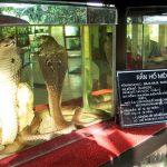 Du lịch trại rắn Đồng Tâm cụ thể địa chỉ, giá vé, giờ mở cửa