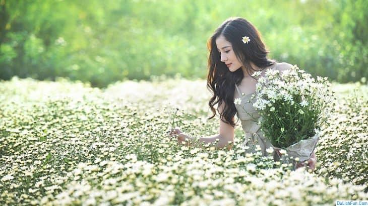 Địa điểm chụp cúc họa mi đẹp nhất Hà Nội địa chỉ & giá vé. Chụp ảnh cúc họa mi ở đâu Hà Nội đẹp. Địa chỉ vườn cúc họa mi ở Hà Nội.