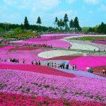Hướng dẫn tham quan công viên Hitachi Seaside Park cụ thể