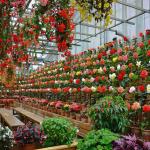 Thông tin chung về cánh đồng hoa Nabana-no-Sato đầy đủ