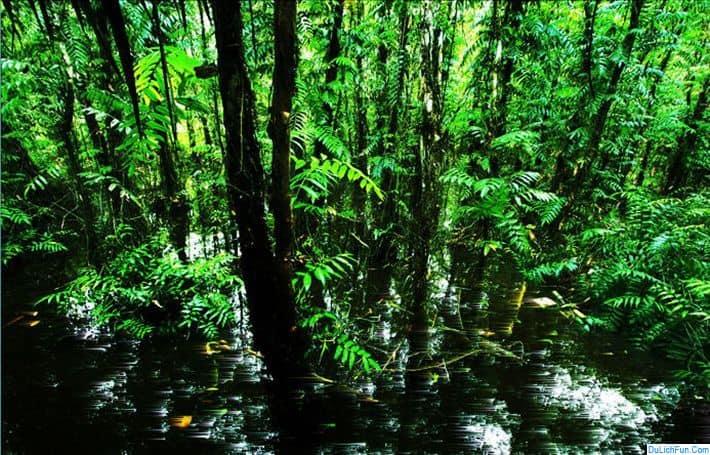 Du lịch Vườn quốc gia Chư Mom Ray có gì hay? Hướng dẫn du lịch vườn quốc gia Chư Mom Ray cụ thể đường đi, cảnh đẹp, khám phá...