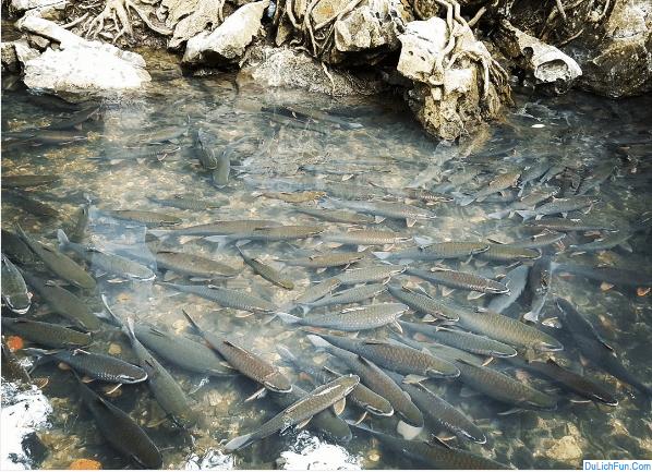 Kinh nghiệm đi suối cá thần Cẩm Lương, Thanh Hóa lạ, độc. Hướng dẫn, cẩm nang, thông tin cần thiết du lịch suối cá thần Cẩm Lương.