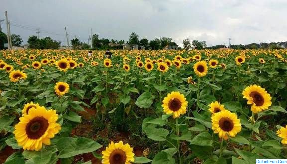 Cập nhật thông tin Vườn hoa Tà Nung Đà Lạt chuẩn, chính xác. Hướng dẫn, cẩm nang du lịch Vườn hoa Tà Nung cụ thể thời điểm đẹp.