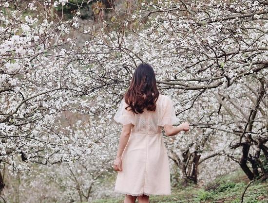 Kinh nghiệm phượt Mộc Châu mùa hoa mận tự túc, giá rẻ