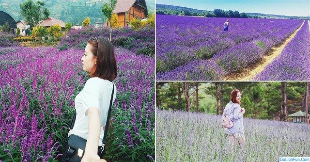Hướng dẫn đường đi cánh đồng hoa lavender Đà Lạt. Kinh nghiệm, cẩm nang, thông tin đi vườn hoa Lavender Đà Lạt cập nhật đầy đủ.