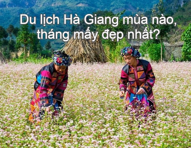 Kinh nghiệm du lịch Hà Giang mùa nào, tháng mấy đẹp nhất