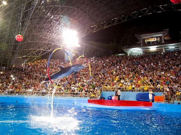 Kinh nghiệm du lịch Tuần Châu, xiếc cá heo Tuần Châu