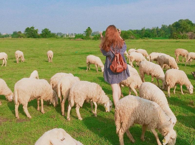 Địa điểm du lịch Vũng Tàu, đồng cừu Suối Nghệ