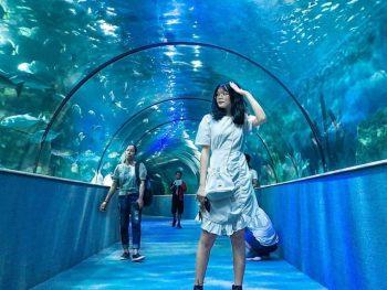 Khu vui chơi nổi tiếng Hà Nội, thủy cung Times City