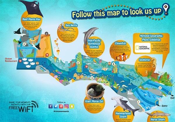 Du lịch thủy cung SEA Sentosa có gì hay? Trải nghiệm thú vị ở thủy cung SEA Sentosa