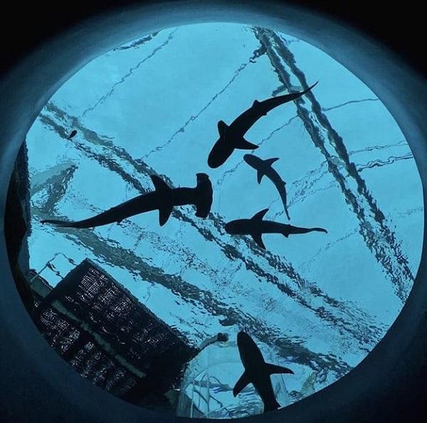 Review thủy cung S.E.A Sentosa, Singapore đường đi, giá vé. Hướng dẫn, kinh nghiệm đi thủy cung S.E.A Aquarium Sentosa cụ thể nhất