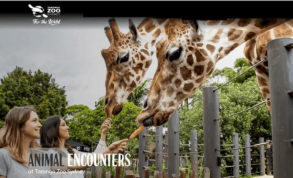Kinh nghiệm đi chơi vườn thú Taronga Sydney Úc giá rẻ. Sở thú Taronga Sydney có gì?