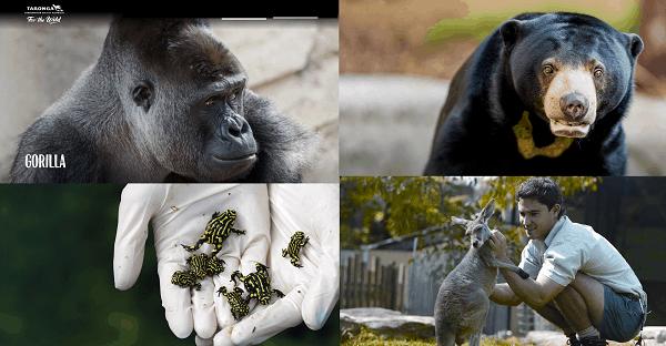 Review sở thú Taronga Sydney Úc từ A-Z