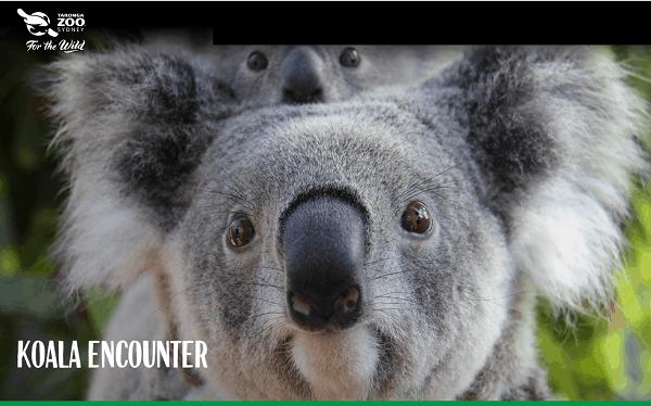 Review vườn thú Taronga Sydney Úc chi tiết. Các loài động vật ở sở thú Taronga Sydney