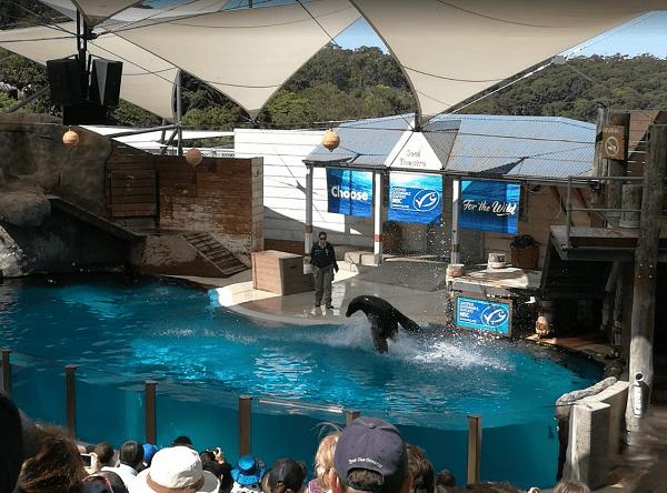 Xem biểu diễn cá heo ở vườn thú Taronga Sydney Úc