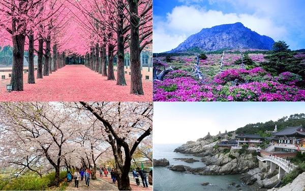 Du lịch Hàn Quốc tháng 5 nên đi đâu chơi, tham quan? Gợi ý địa điểm du lịch ở Hàn Quốc tháng 5