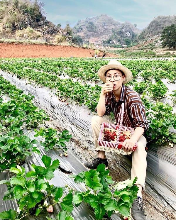 Kinh nghiệm đi Mộc Châu tự túc, tham quan trang trại dâu tây Chimi Farm