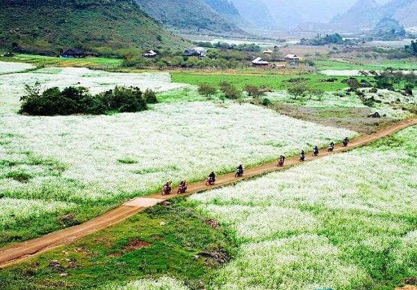 Kinh nghiệm du lịch Mộc Châu, Bản Pá Phách mùa hoa cải