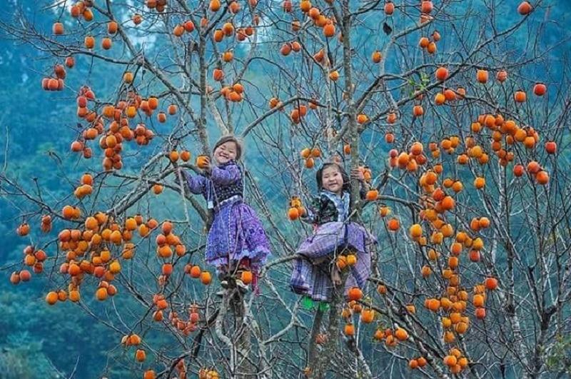 Nên du lịch Mộc Châu mùa nào, tháng mấy đẹp nhất?