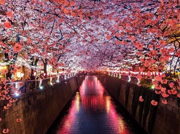 Địa điểm du lịch ở Nhật Bản trong tháng 4. Nên đi đâu chơi, tham quan khi du lịch Nhật Bản tháng 4