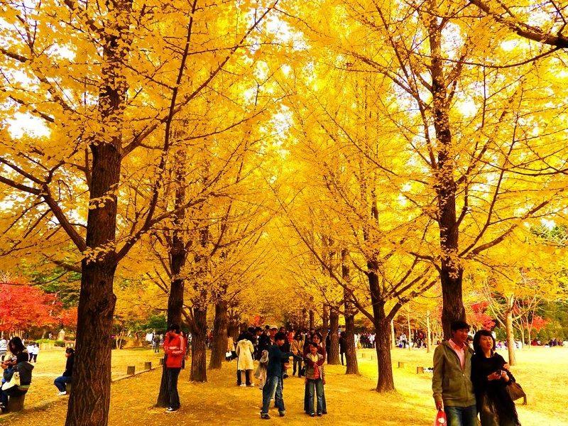 Du lịch Gangwon-do có gì đẹp? Địa điểm du lịch nổi tiếng nhất Gangwon-do