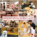 Ở Hà Nội có quán cafe mèo nào? Những quán cafe mèo nổi tiếng ở Hà Nội
