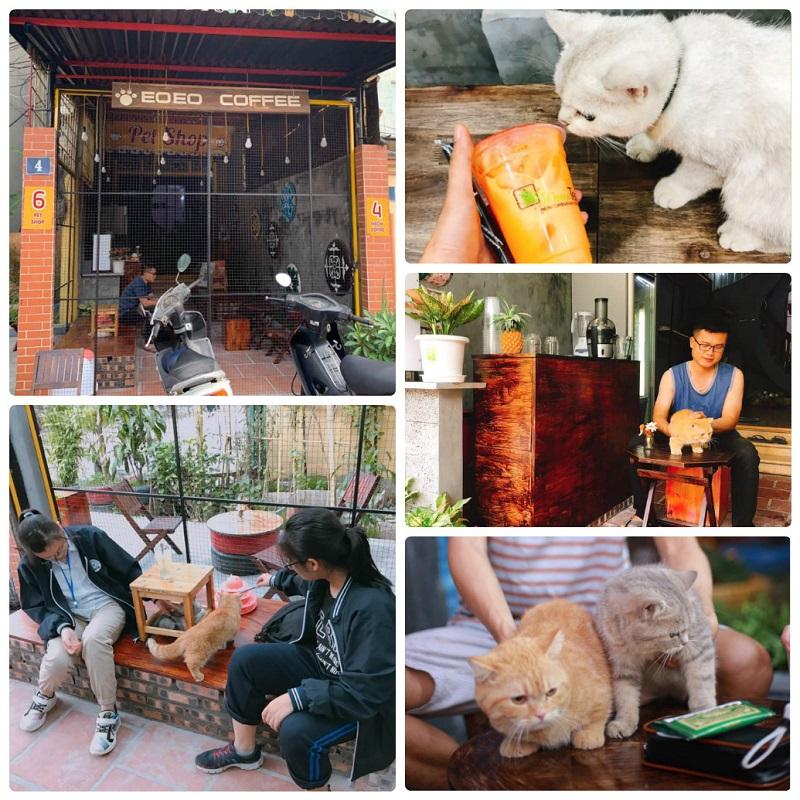 EOEO Coffee. một quán cafe mèo ở Hà Nội nổi tiếng nhất
