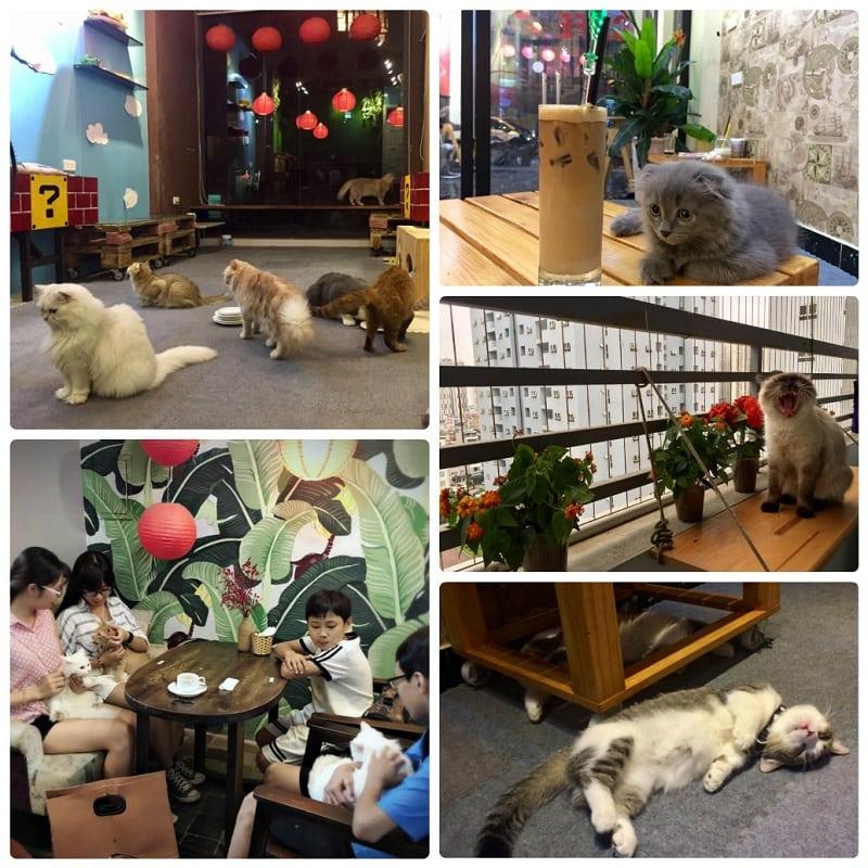 Những quán cafe mèo ở Hà Nội, cafe mèo Lizzy House