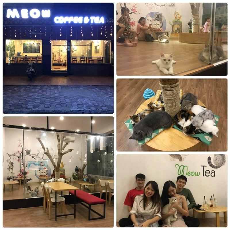 Ở Hà Nội có quán cafe mèo nào? Trà sữa mèo MeowTea